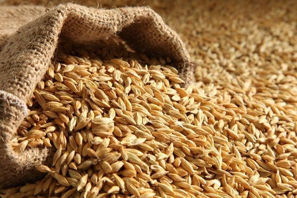 دولت واردات گندم را فعلاً متوقف نموده است